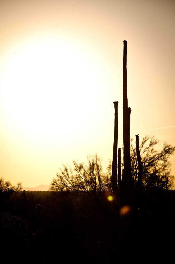 Arizona-25
